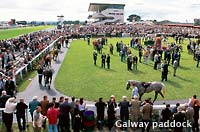 Photo of Galway paddock, County Galway